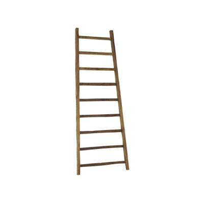 D-Bodhi Ladder High Big